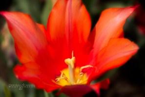 Biltmore Estate spring-3275-Edit