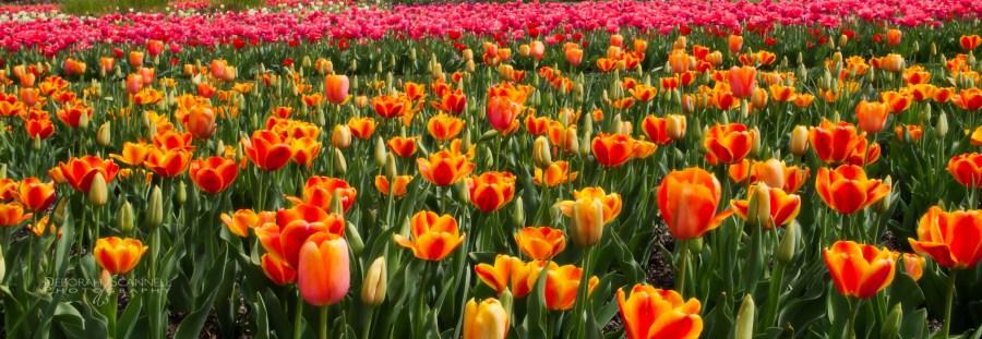 Biltmore Estate spring-3311-Edit