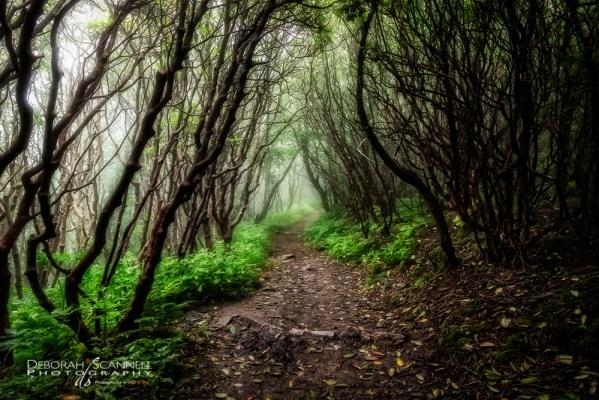 Spooky Trail