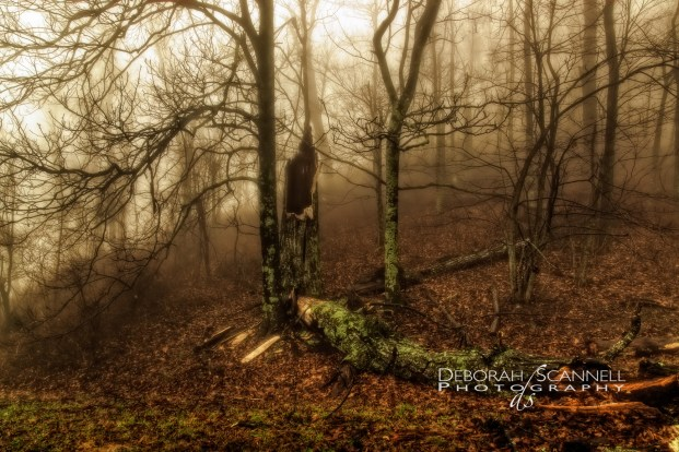 Fractured In Fog
