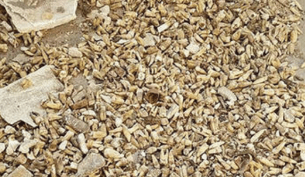 Pedreiros encontram 1000 dentes humanos escondidos em parede