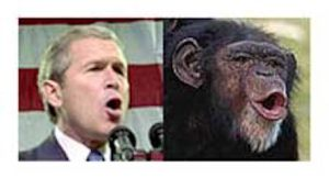 bush-chimp