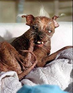 uglydog