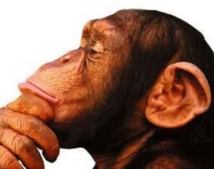 Qué hace el cerebro cuando no está pensando en nada