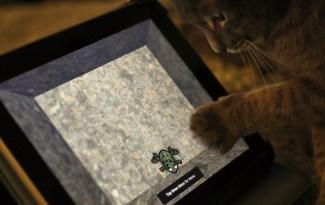 Kat aan het spelen met een iPad