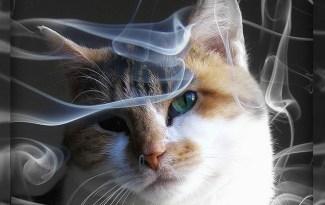 Kat roken