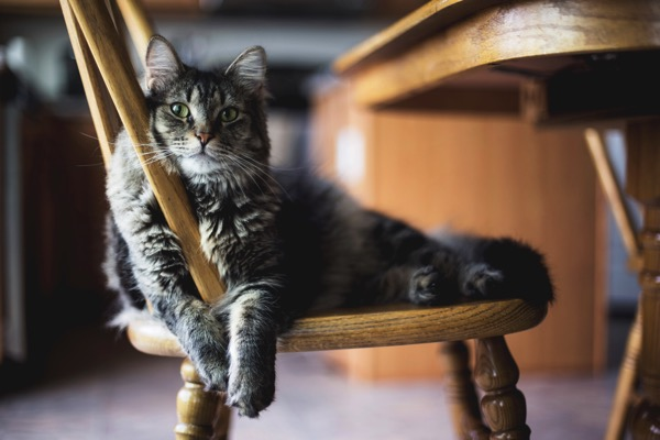 Vlooien binnenshuis kat