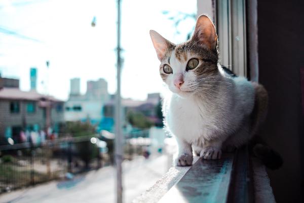 Kat valt uit raam