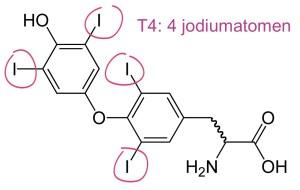Thyroxine T4