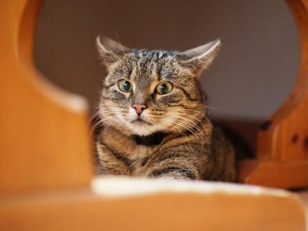 gestresste kat