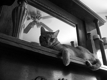 Kat onder ventilator