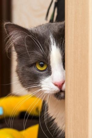 kat plast naast kattenbak
