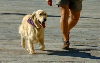 goede hondeneigenaar