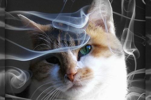 kat passief roken