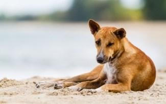 hond met darmproblemen