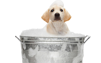 Dog-GroomingUne
