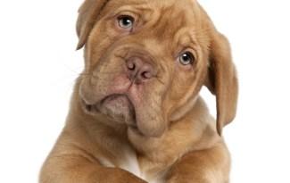 Nom de chien 2014 Belgique