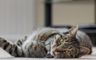 chat non stressé