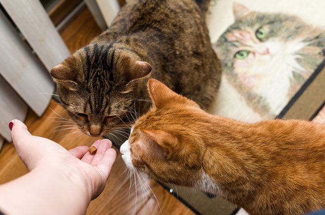 5 conseils pour garder votre chat en bonne sant direct vetdirect vet. Black Bedroom Furniture Sets. Home Design Ideas