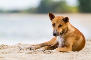 chien probiotique