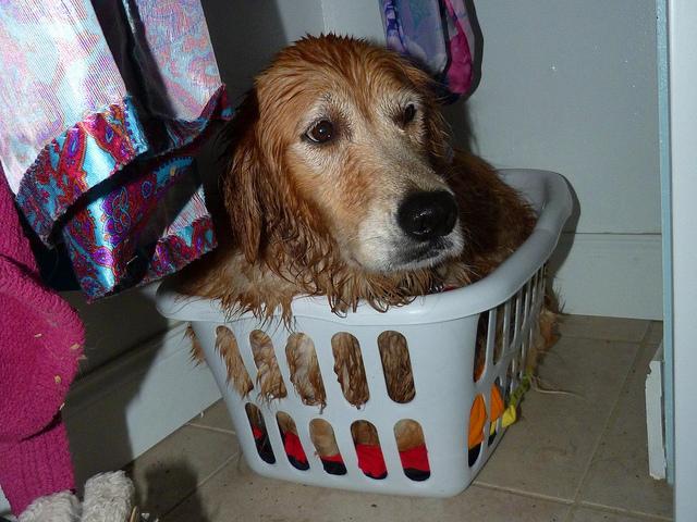 chien peur orage caché