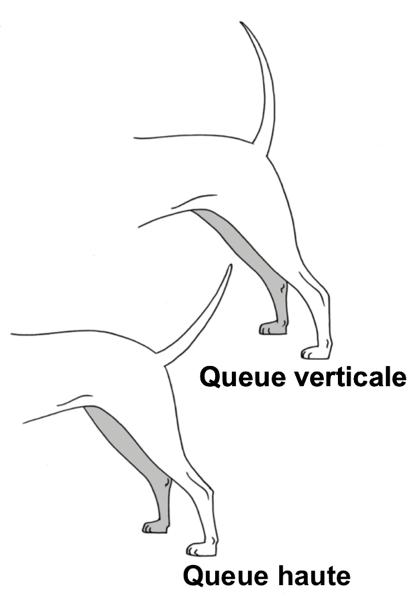 Chien position queue