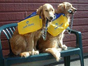 Chiens guides Handi'chiens