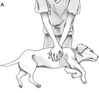 Massage cardiaque à un chien