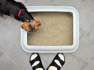 chien dans litière chat