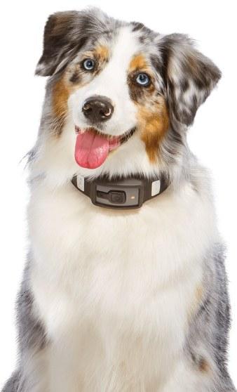 Voyce tracer activité chien