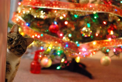 Chat et sapin