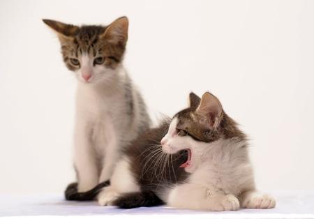 chatte image nouveau