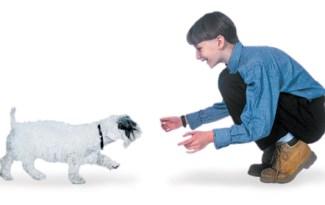 rappel chien