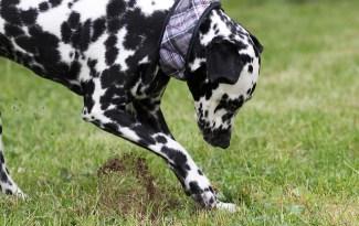 chien creuse des trous