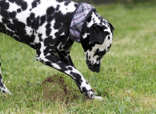 chien creuse trous jardin