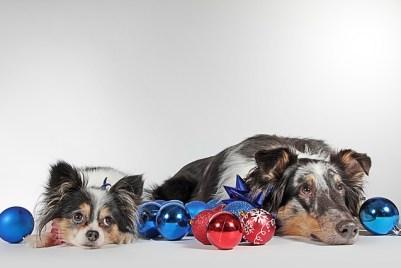 danger de Noël chien et chat