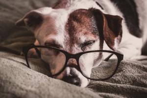 Un vieux chien peut-il apprendre ?