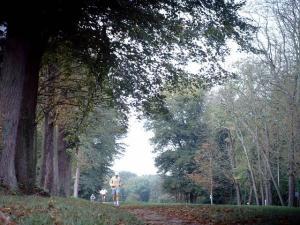 Parc de Saint Cloud - Forêt