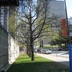 Trees along Ross Avenue outside the Sculpture Garden