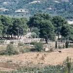 Greece_Alan_Bromberg_Olympia_60ZZ_001