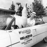 Wise-llama-convertible-001