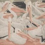 Janet E. Turner, Pelicans, 1951
