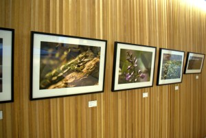 Some of the pictures hanging in Conservation House.