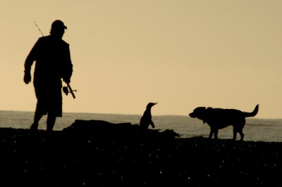 Yellow-eyed penguin, angler and dog – photo by Peter Langlands.