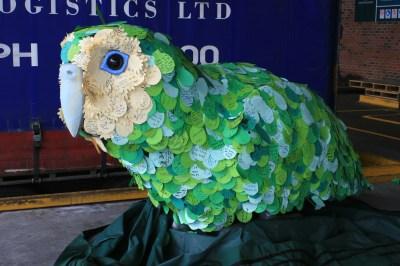 Kiri te Kākāpō sporting her lovely plumage.