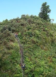 Steel ladder on the way to Motutapere Hut.