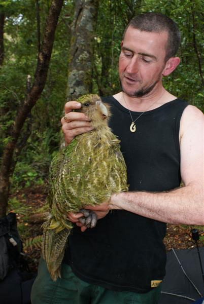 Chris Birmingham holding Rangi the kakapo in native bush.