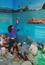 A little girls points to an orca on one of the displays at the information centre.