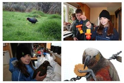 Charlotte meeting various animals at the Te Anau Wildlife Park.