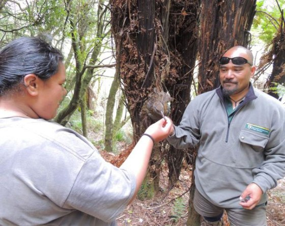 Ranger Joe introducing Bobby to a North Island weka.